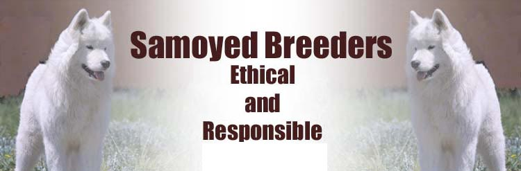 Samoyed Breeders, Ethical and Responsible